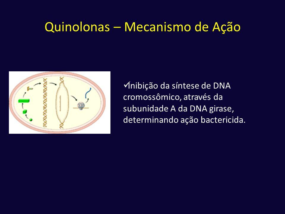 Quinolonas – Mecanismo de Ação