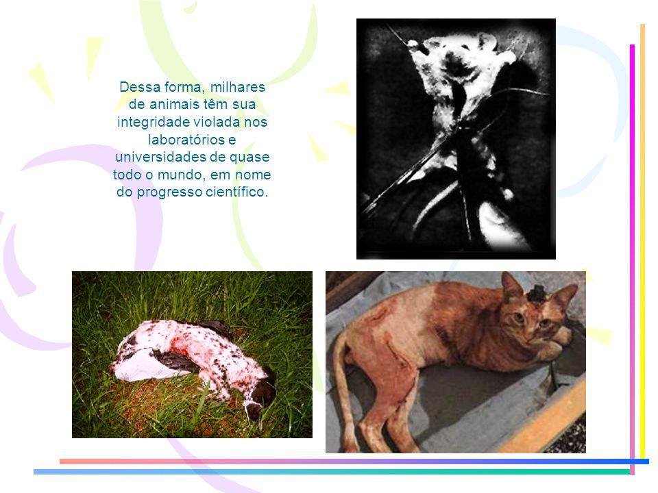 Dessa forma, milhares de animais têm sua integridade violada nos laboratórios e universidades de quase todo o mundo, em nome do progresso científico.