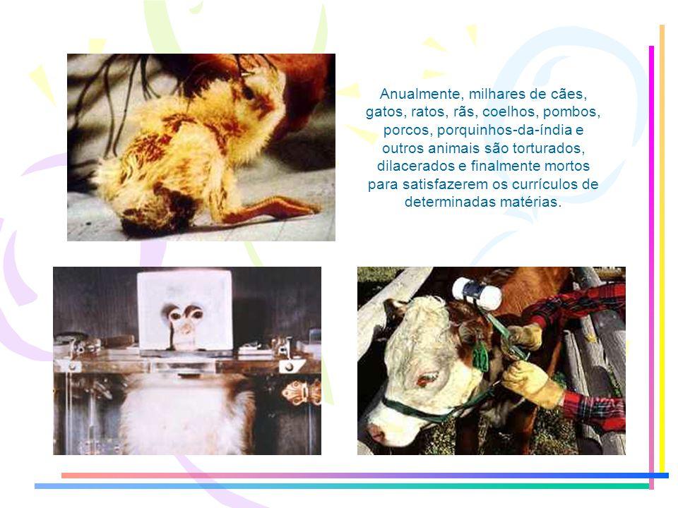 Anualmente, milhares de cães, gatos, ratos, rãs, coelhos, pombos, porcos, porquinhos-da-índia e outros animais são torturados, dilacerados e finalmente mortos para satisfazerem os currículos de determinadas matérias.
