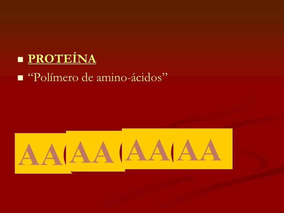 PROTEÍNA Polímero de amino-ácidos AA AA AA AA