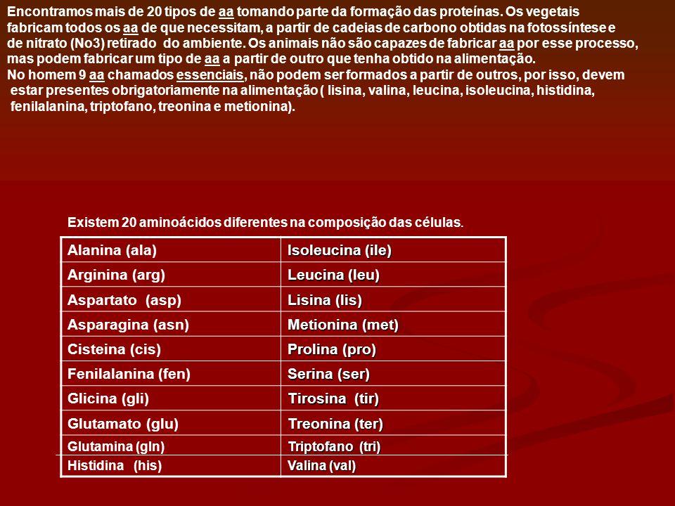 Alanina (ala) Isoleucina (ile) Arginina (arg) Leucina (leu)