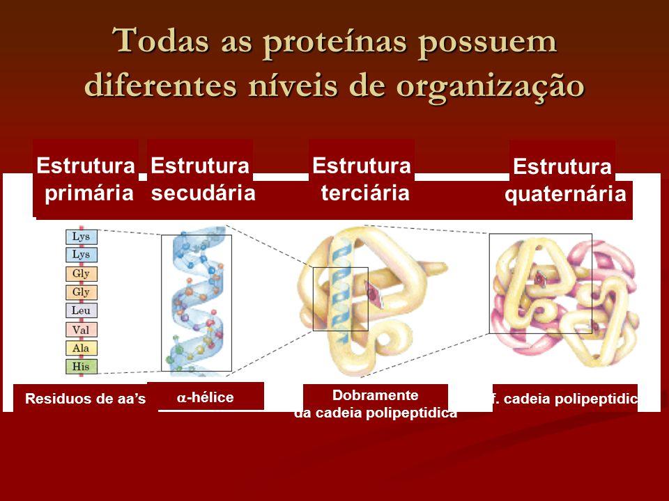 Todas as proteínas possuem diferentes níveis de organização