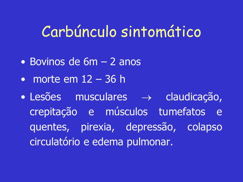 Carbúnculo sintomático