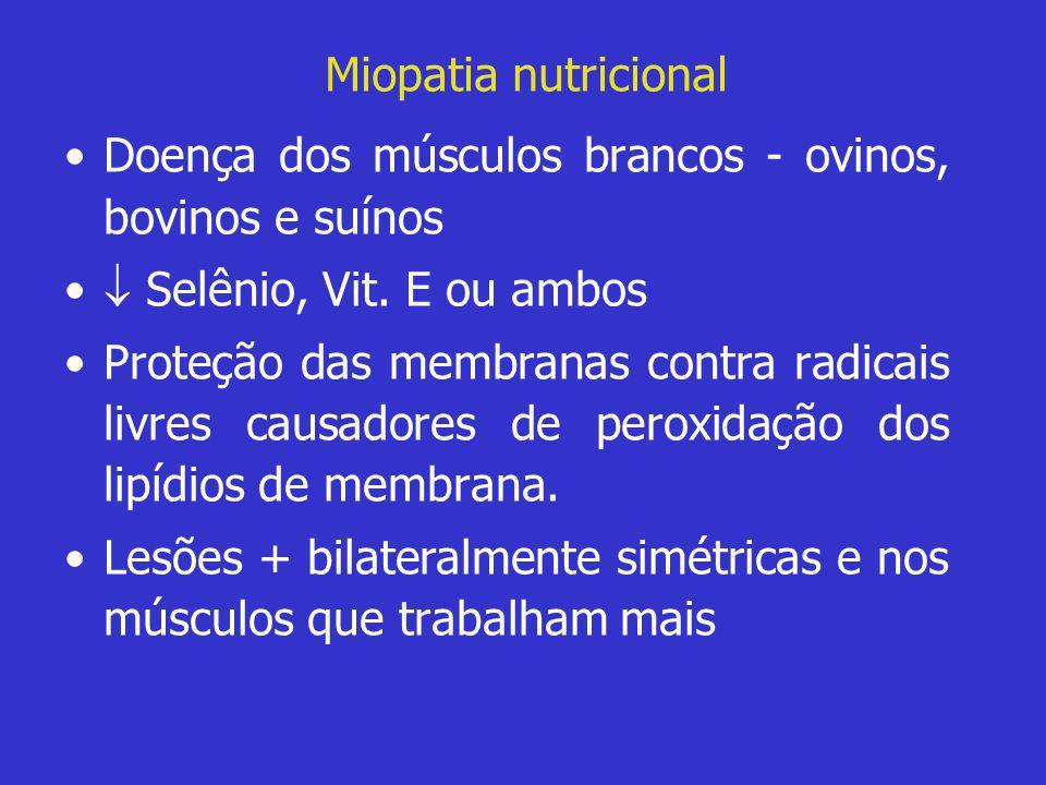 Miopatia nutricional Doença dos músculos brancos - ovinos, bovinos e suínos.  Selênio, Vit. E ou ambos.