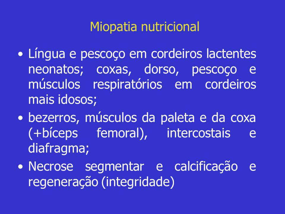 Miopatia nutricional Língua e pescoço em cordeiros lactentes neonatos; coxas, dorso, pescoço e músculos respiratórios em cordeiros mais idosos;