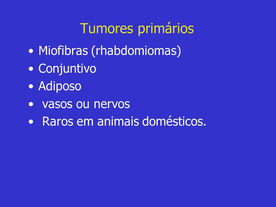 Tumores primários Miofibras (rhabdomiomas) Conjuntivo Adiposo