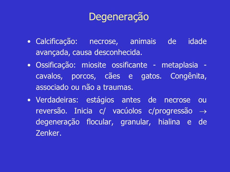 Degeneração Calcificação: necrose, animais de idade avançada, causa desconhecida.