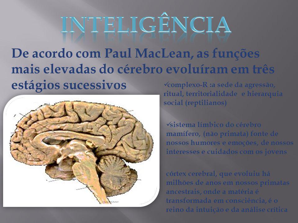 INTELIGÊNCIA De acordo com Paul MacLean, as funções mais elevadas do cérebro evoluíram em três estágios sucessivos.