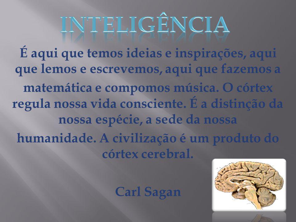 humanidade. A civilização é um produto do córtex cerebral.