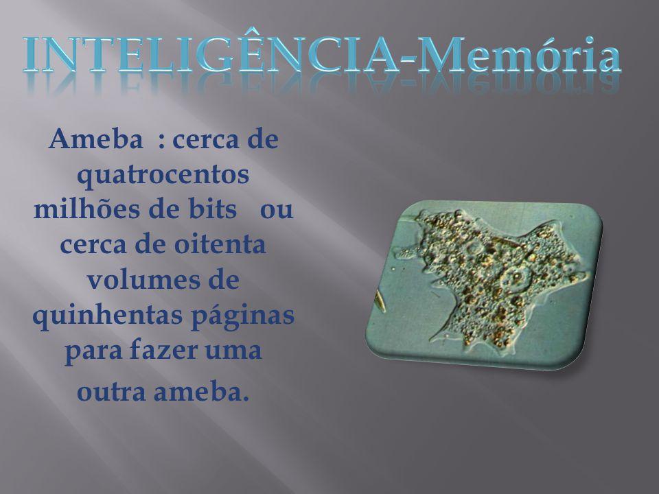 INTELIGÊNCIA-Memória