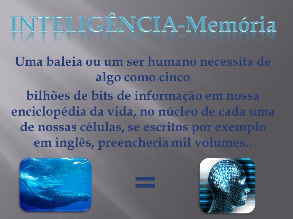 = INTELIGÊNCIA-Memória