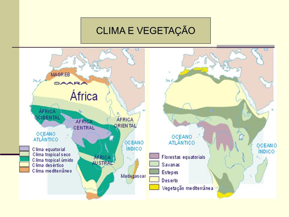 CLIMA E VEGETAÇÃO