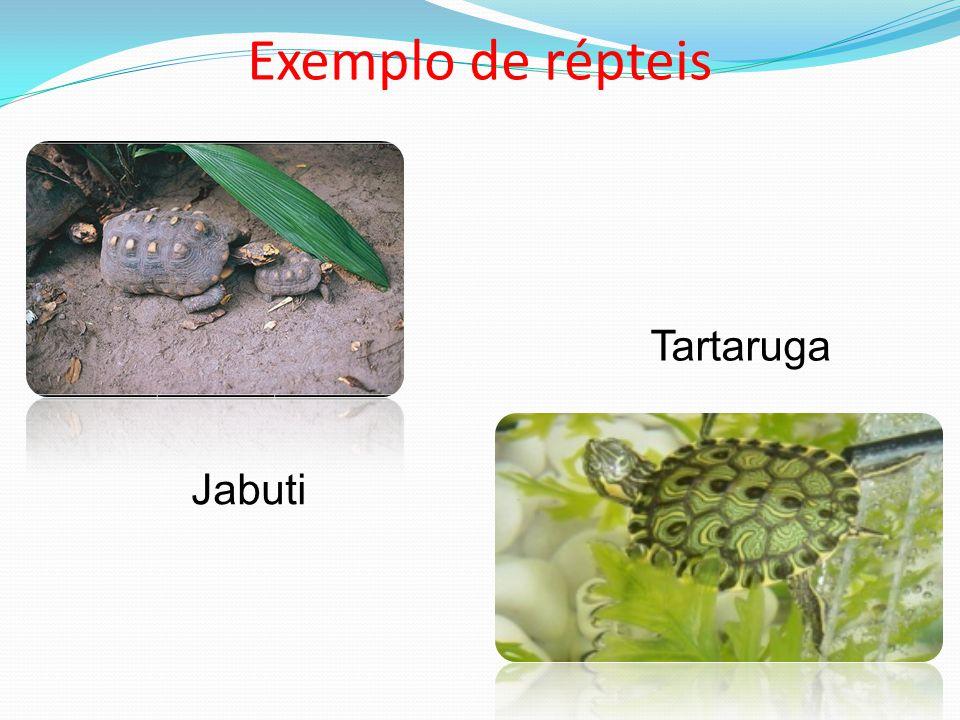 Exemplo de répteis Tartaruga Jabuti