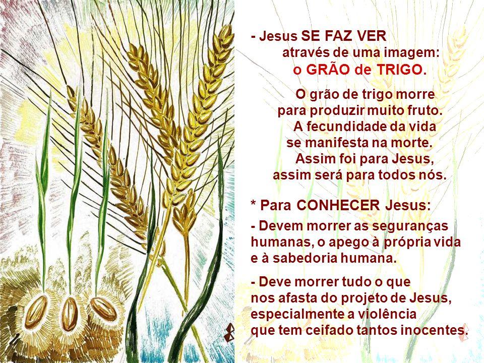 - Jesus SE FAZ VER o GRÃO de TRIGO. * Para CONHECER Jesus:
