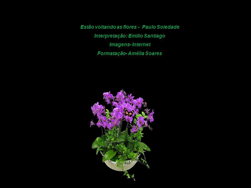 Estão voltando as flores - Paulo Soledade