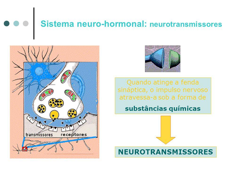 Sistema neuro-hormonal: neurotransmissores