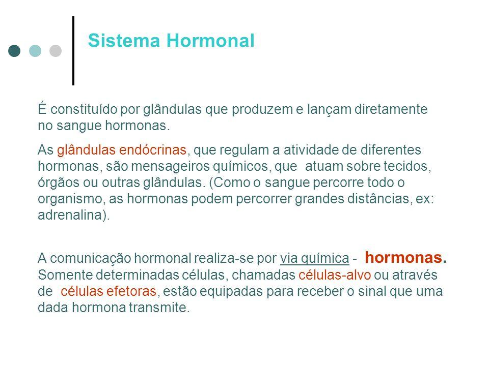 Sistema Hormonal É constituído por glândulas que produzem e lançam diretamente no sangue hormonas.