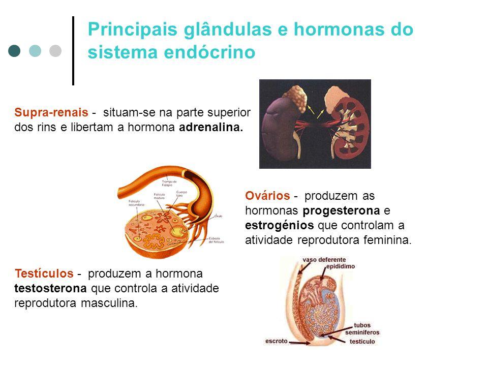 Principais glândulas e hormonas do sistema endócrino