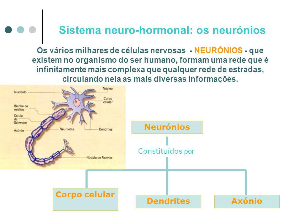 Sistema neuro-hormonal: os neurónios