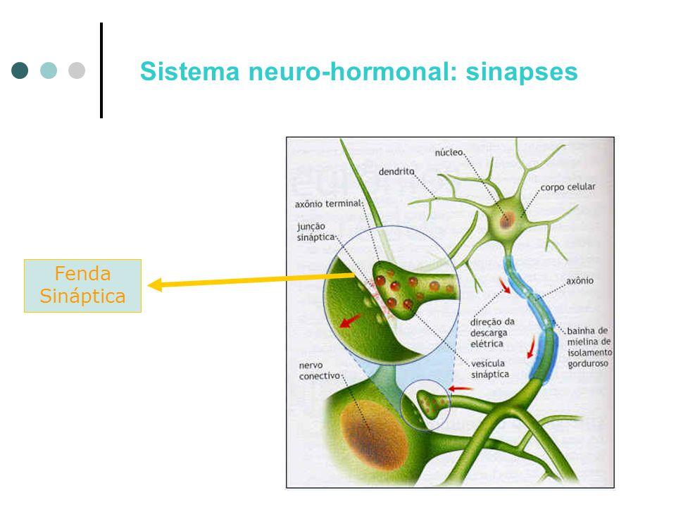Sistema neuro-hormonal: sinapses