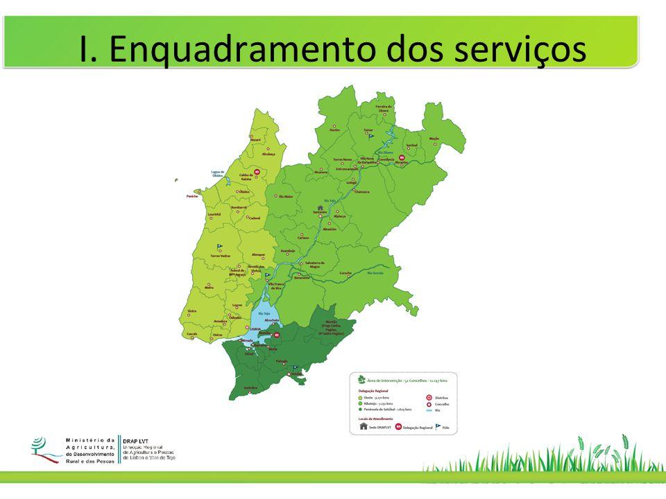 I. Enquadramento dos serviços