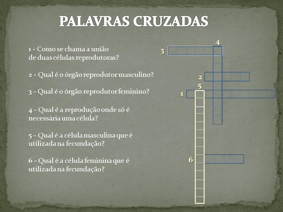 PALAVRAS CRUZADAS 4 3 2 5 1 6 1 - Como se chama a união