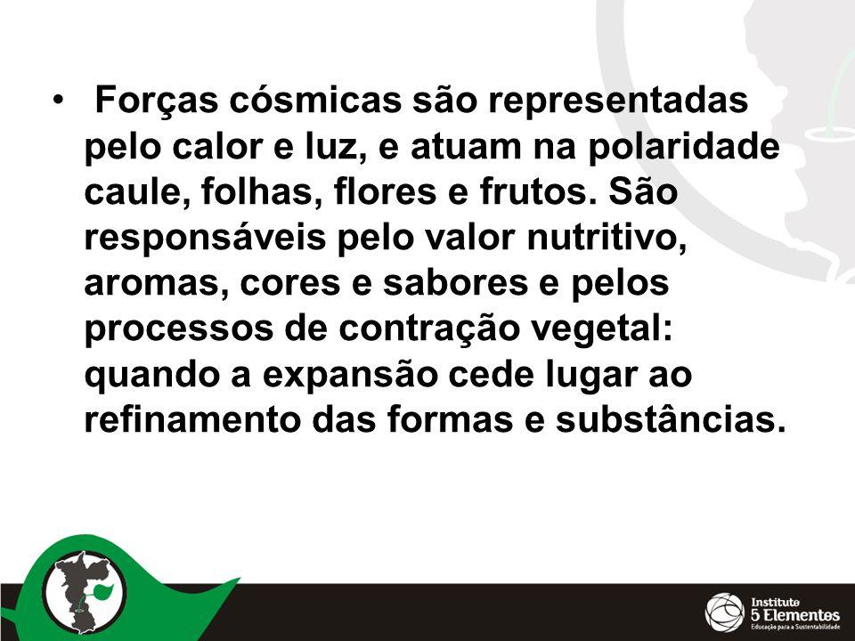 Forças cósmicas são representadas pelo calor e luz, e atuam na polaridade caule, folhas, flores e frutos.