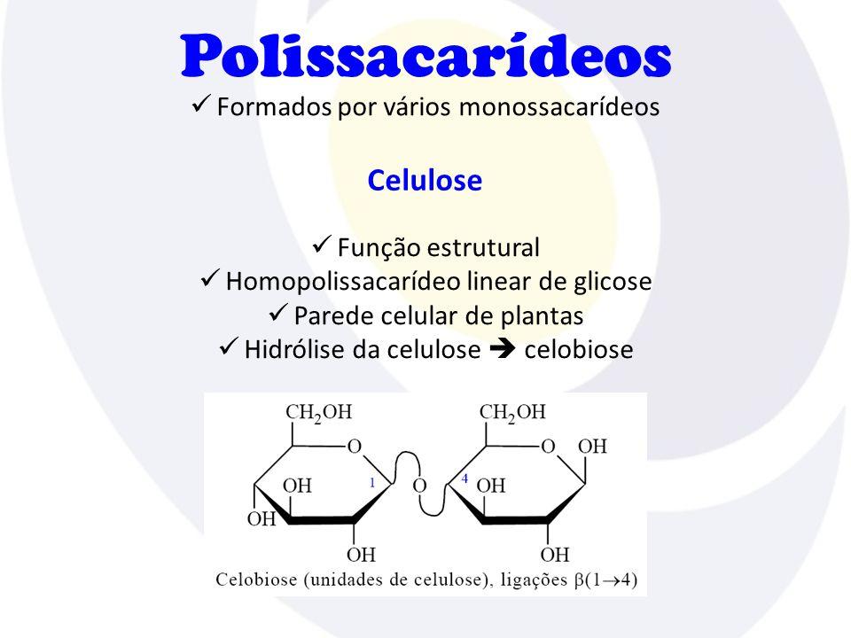 Polissacarídeos Celulose Formados por vários monossacarídeos
