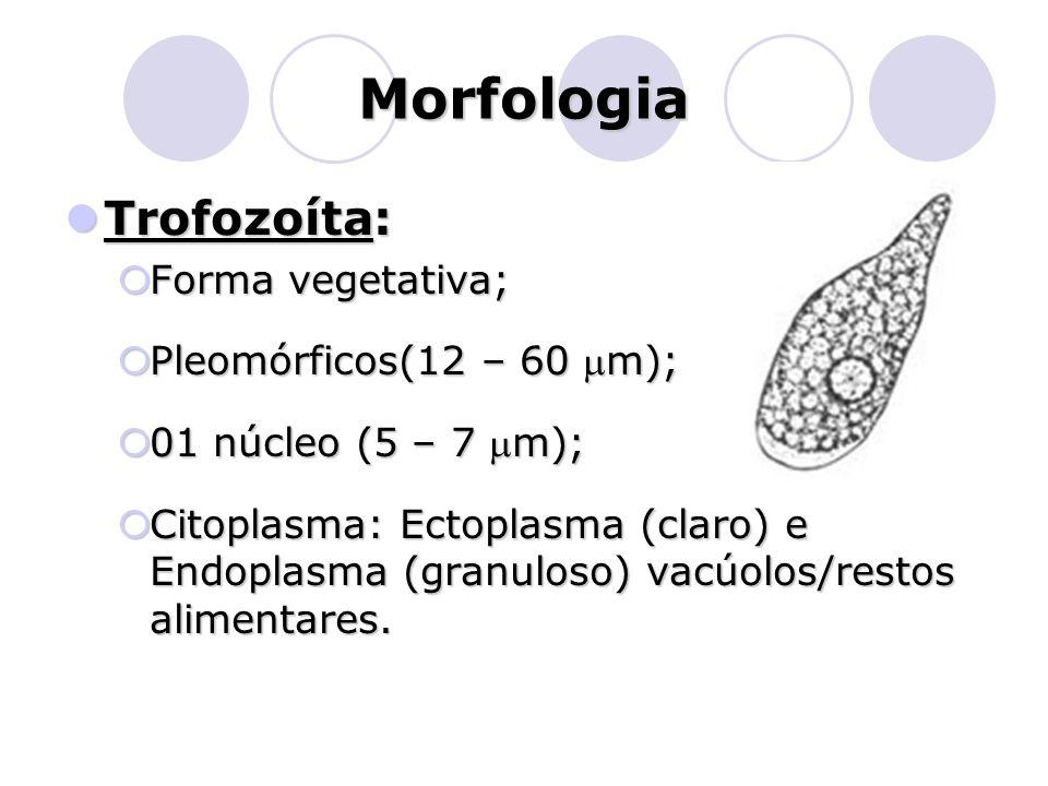 Morfologia Trofozoíta: Forma vegetativa; Pleomórficos(12 – 60 mm);