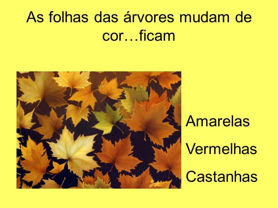 As folhas das árvores mudam de cor…ficam