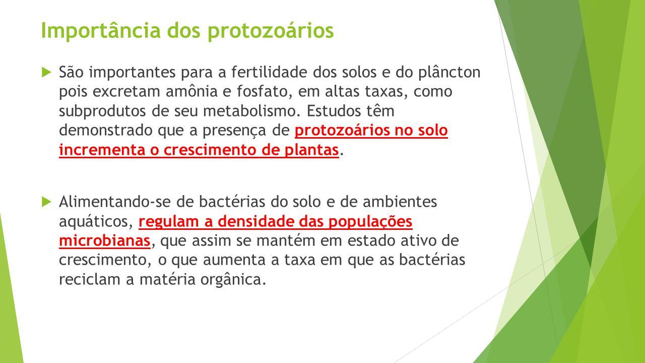 Importância dos protozoários