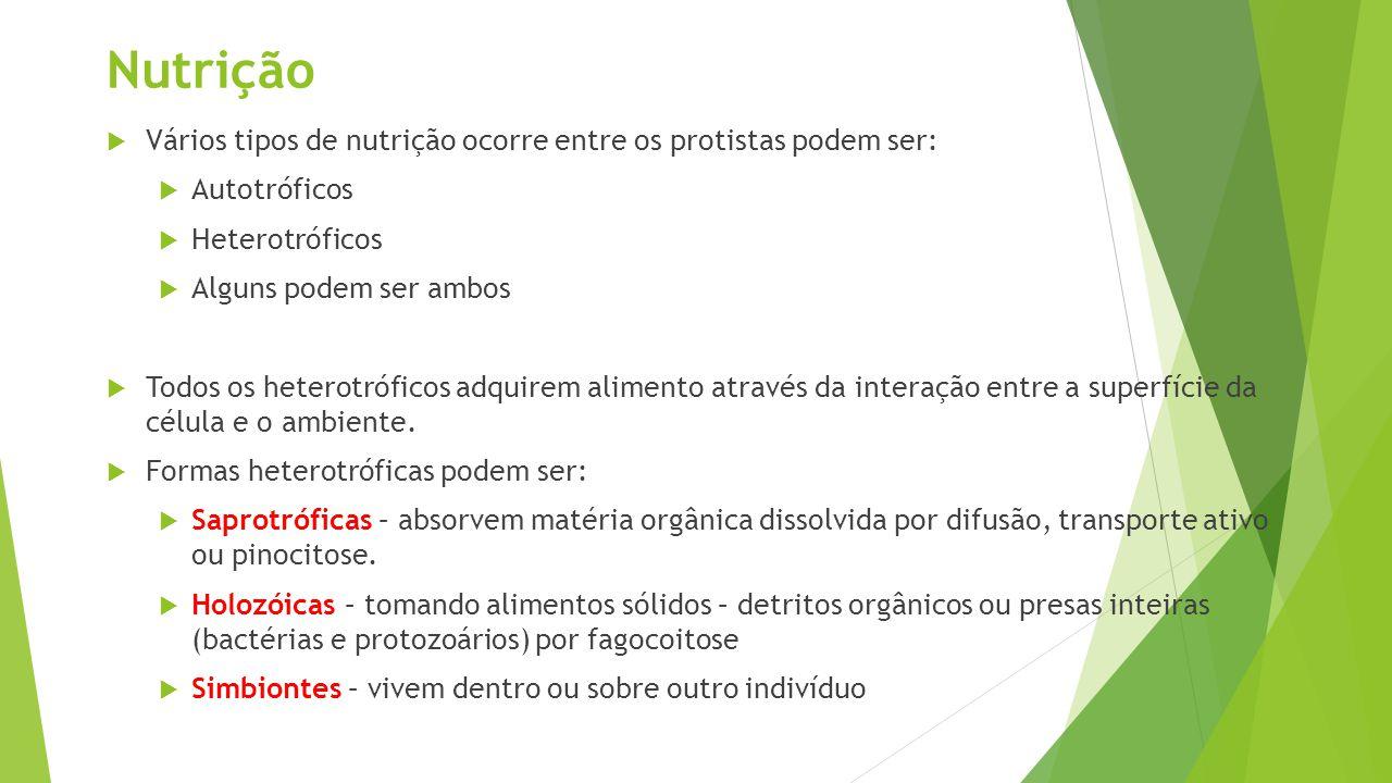 Nutrição Vários tipos de nutrição ocorre entre os protistas podem ser: