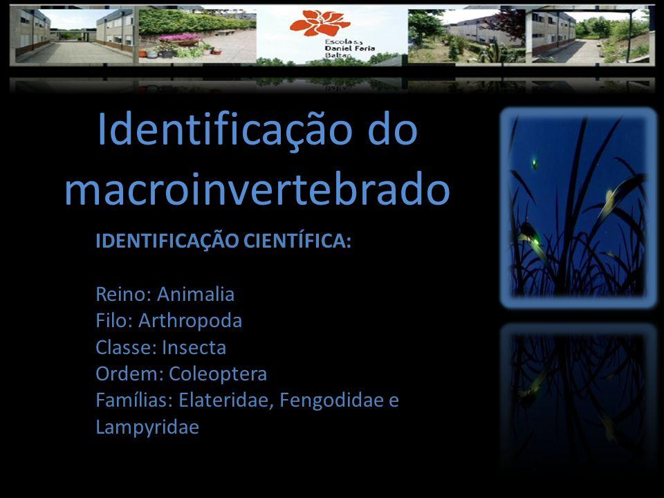 Identificação do macroinvertebrado