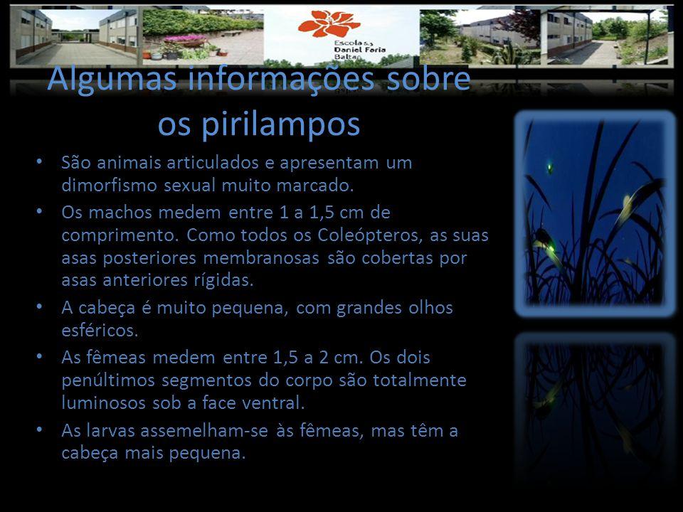 Algumas informações sobre os pirilampos