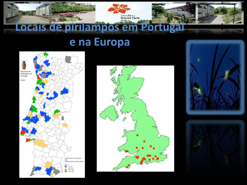 Locais de pirilampos em Portugal e na Europa