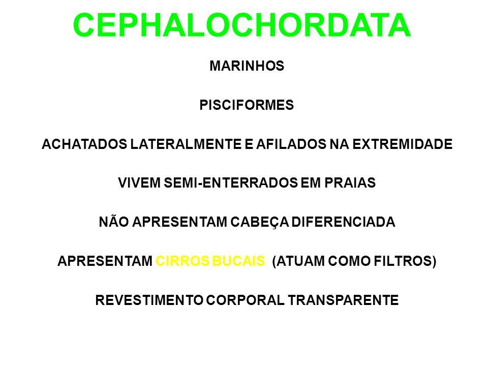 CEPHALOCHORDATA MARINHOS PISCIFORMES