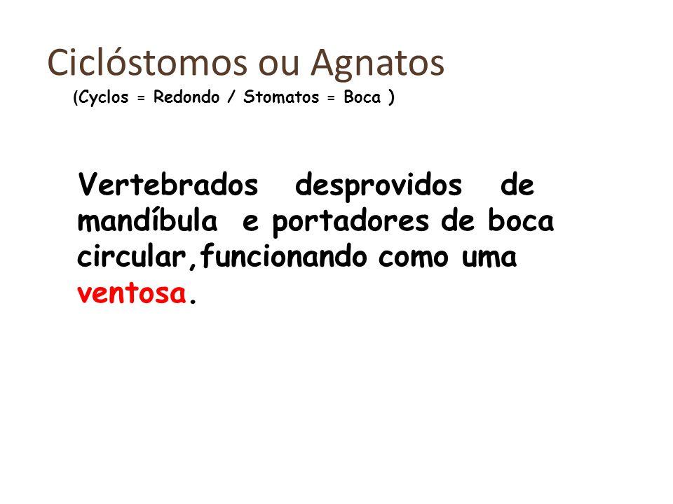 Ciclóstomos ou Agnatos