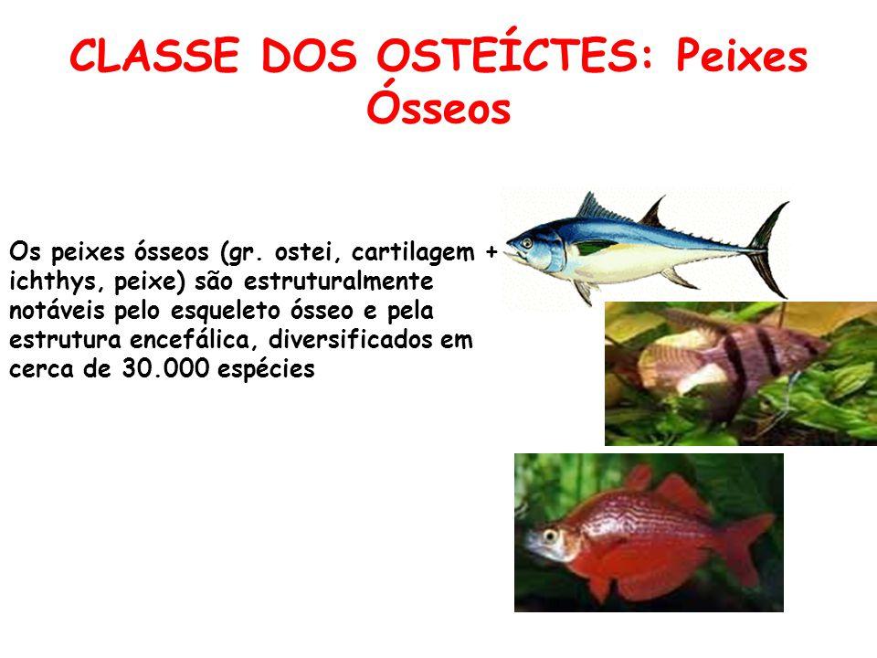 CLASSE DOS OSTEÍCTES: Peixes Ósseos