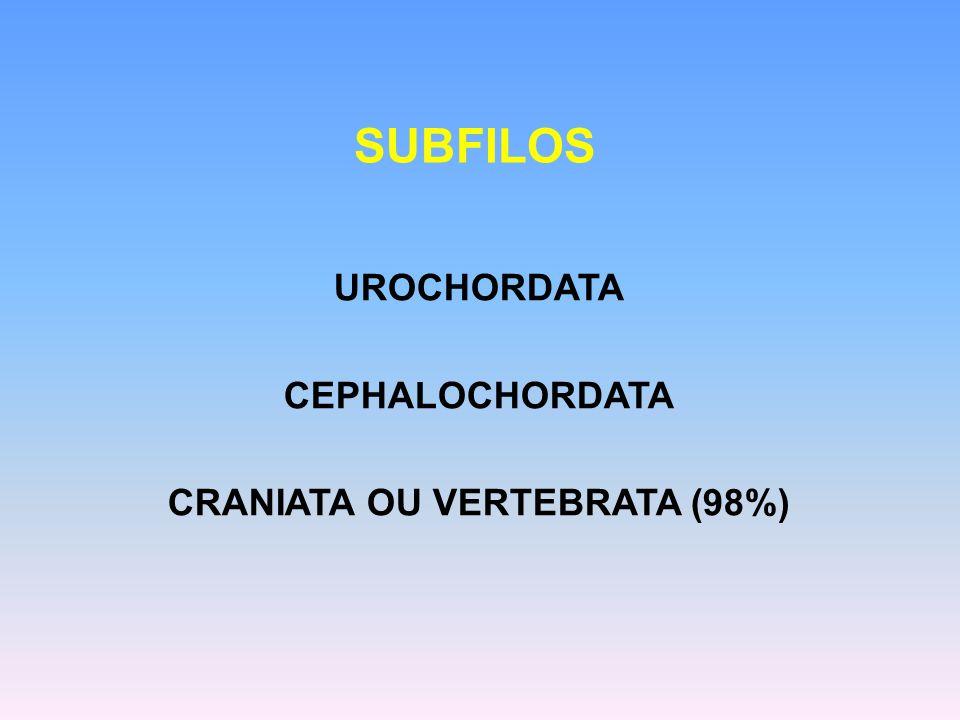 CRANIATA OU VERTEBRATA (98%)