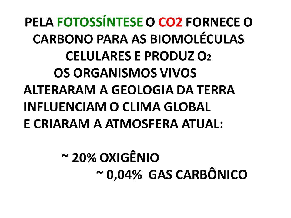 PELA FOTOSSÍNTESE O CO2 FORNECE O CARBONO PARA AS BIOMOLÉCULAS CELULARES E PRODUZ O2