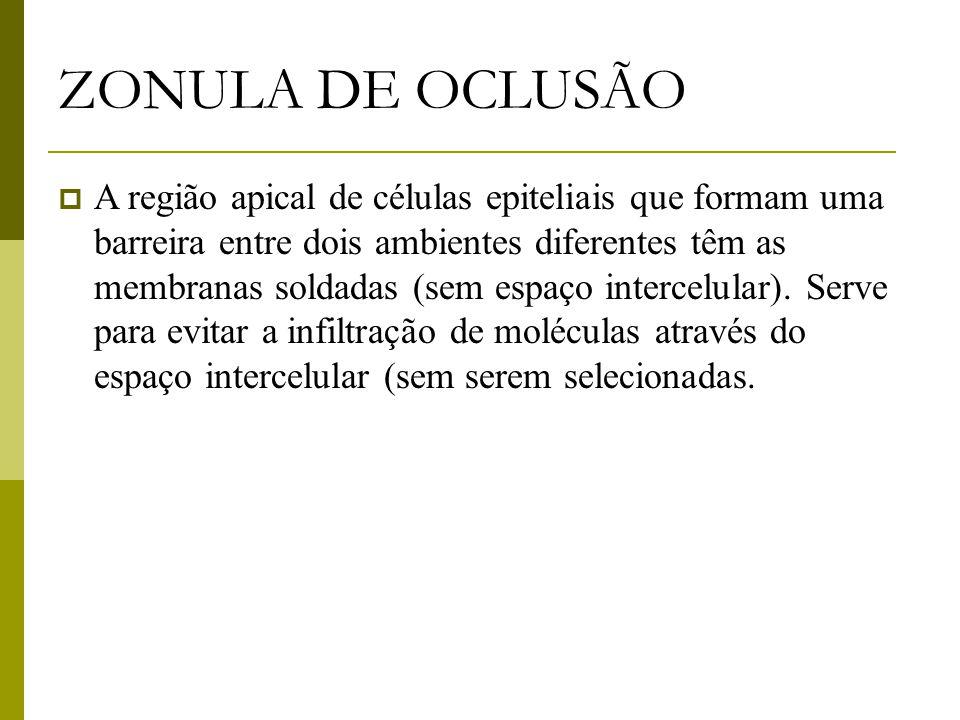 ZONULA DE OCLUSÃO