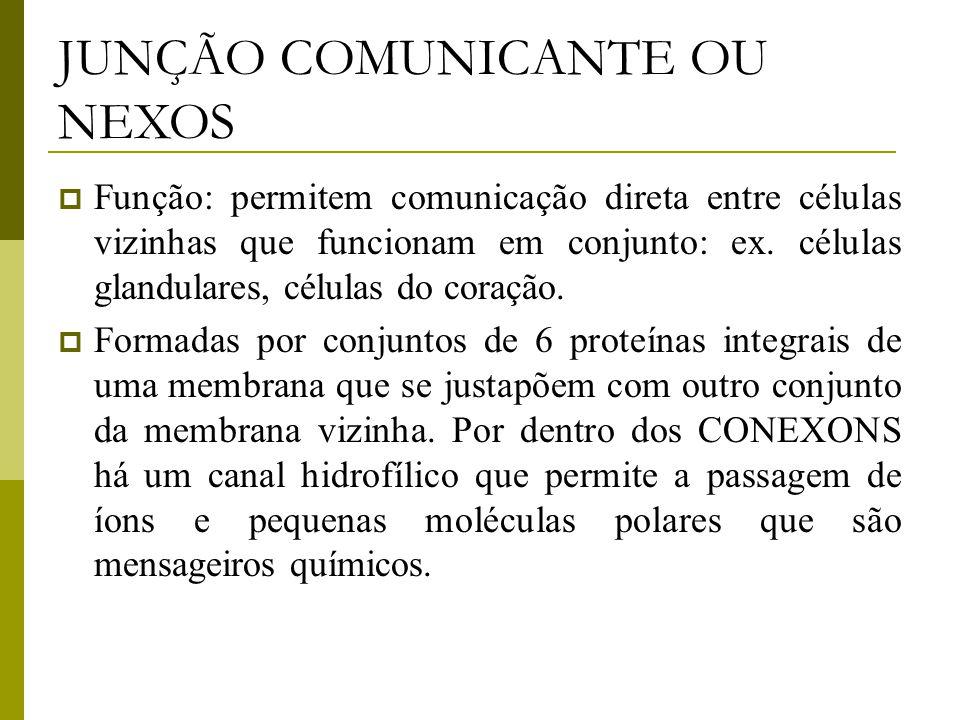 JUNÇÃO COMUNICANTE OU NEXOS