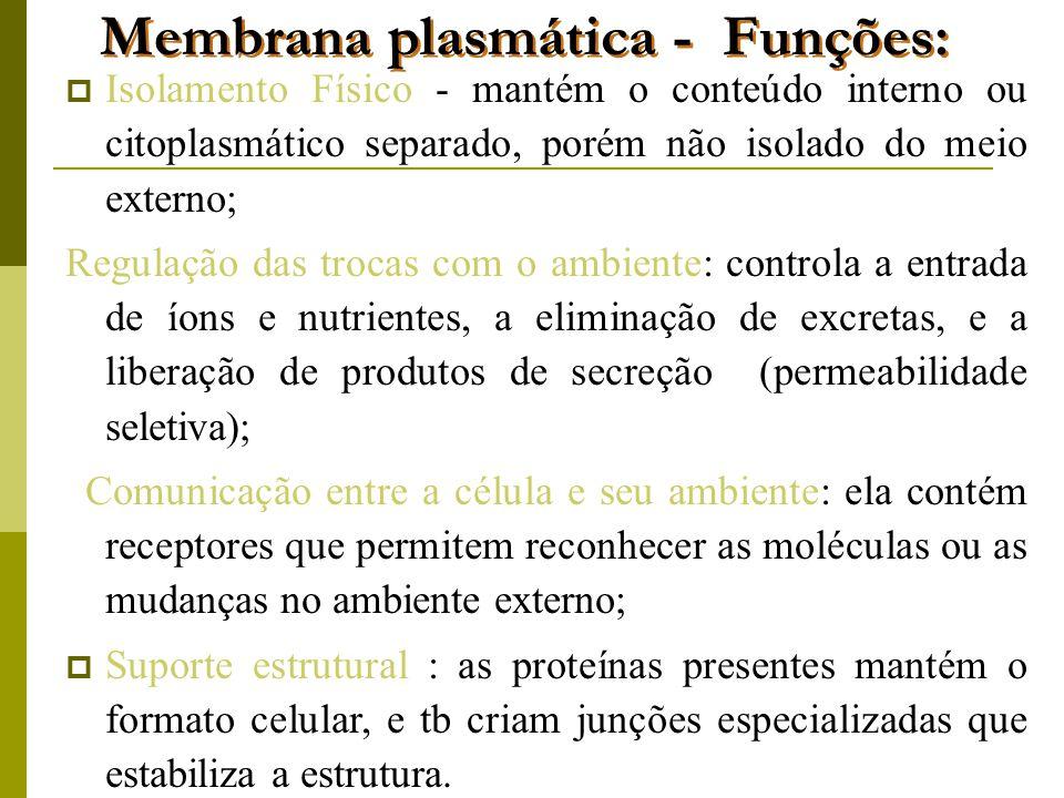 Membrana plasmática - Funções: