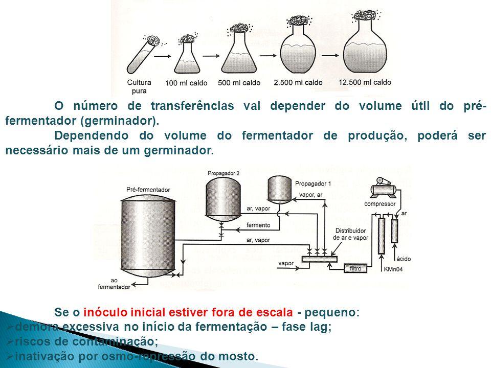 O número de transferências vai depender do volume útil do pré-fermentador (germinador).