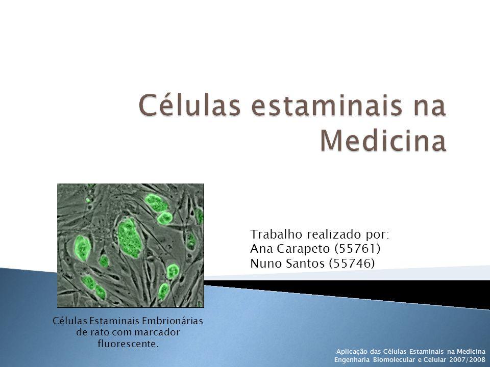 Células estaminais na Medicina