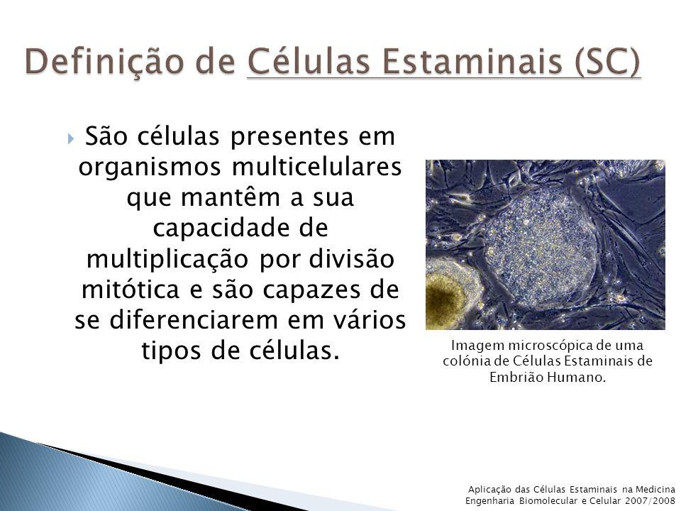 Definição de Células Estaminais (SC)