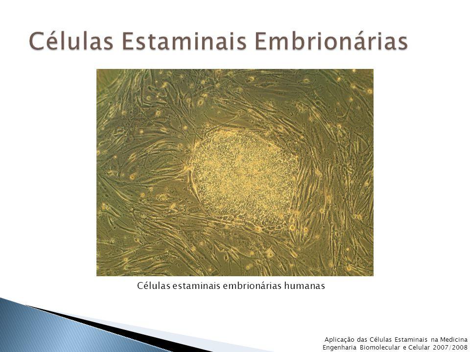 Células Estaminais Embrionárias
