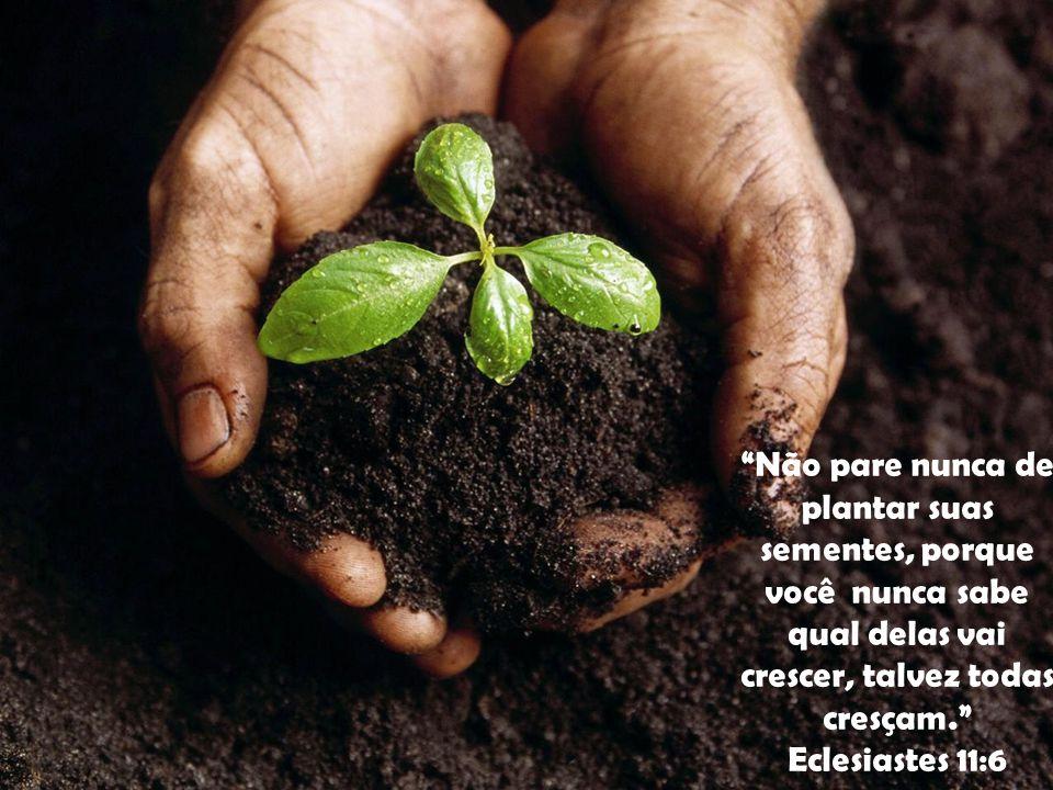 Não pare nunca de plantar suas sementes, porque você nunca sabe qual delas vai crescer, talvez todas cresçam.