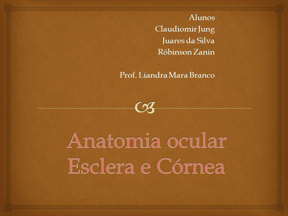 Anatomia ocular Esclera e Córnea