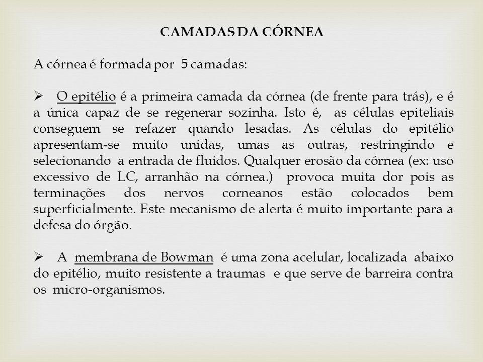 CAMADAS DA CÓRNEA A córnea é formada por 5 camadas: